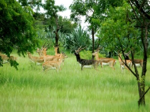 gujarat-wildlife-tourism-spots2
