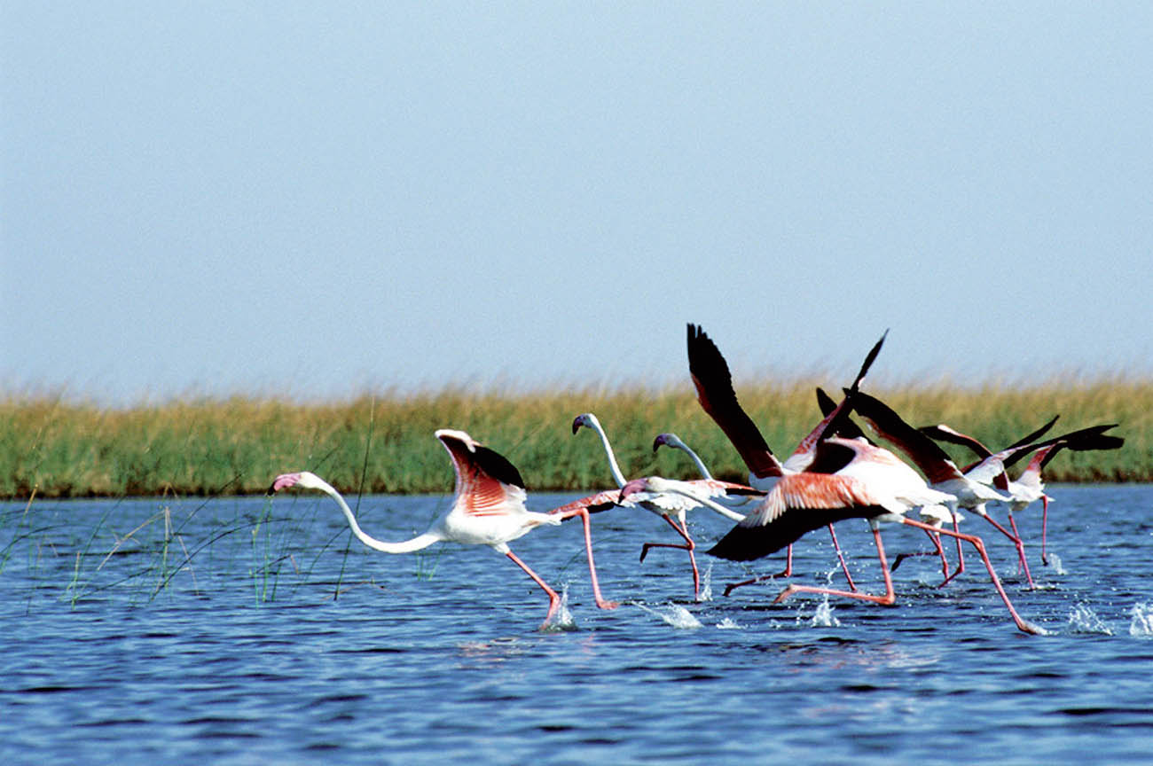 Nal Sarovar Bird Sanctuary, Gujarat
